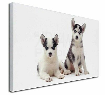 """Siberian Huskies 30""""x20"""" Wall Art Canvas, Extra Large Picture Prin, AD-H63-C3020"""