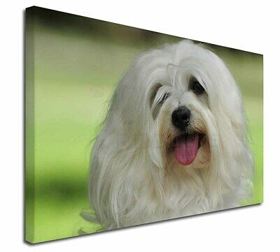 """Havanese Dog 30""""x20"""" Wall Art Canvas, Extra Large Picture Print De, AD-H66-C3020"""