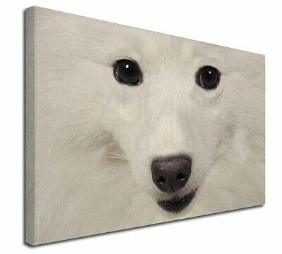 """Japanese Spitz Dog 30""""x20"""" Wall Art Canvas, Extra Large Picture Pr, AD-JS1-C3020"""