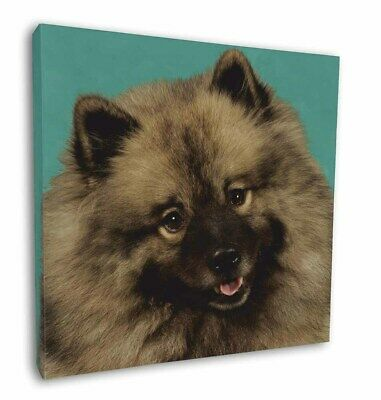 """Keeshond Dog 12""""x12"""" Wall Art Canvas Decor, Picture Print, AD-KEE1-C12"""