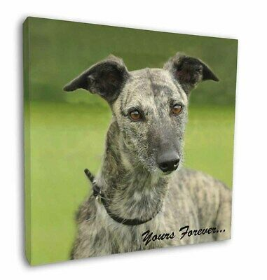 "Greyhound Dog 'Yours Forever' 12""x12"" Wall Art Canvas Decor, Pictur, AD-LU7y-C12"