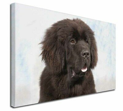 "Newfoundland Dog 30""x20"" Wall Art Canvas, Extra Large Picture Prin, AD-NF1-C3020"