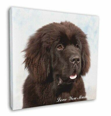"Newfoundland Dog 'Love You Mum' 12""x12"" Wall Art Canvas Decor, Pi, AD-NF3lym-C12"