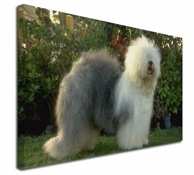 """Old English Sheepdog 30""""x20"""" Wall Art Canvas, Extra Large Picture, AD-OES1-C3020"""