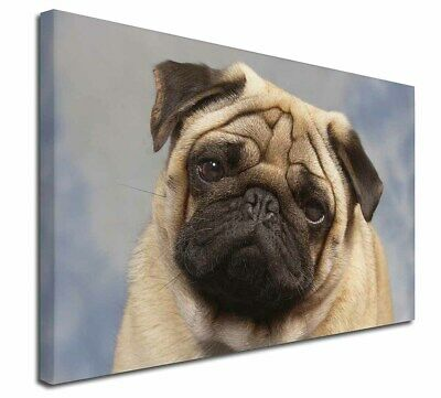 """Fawn Pug Dog 30""""x20"""" Wall Art Canvas, Extra Large Picture Print Dec, AD-P1-C3020"""