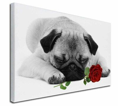 "Pug (B+W Photo) with Red Rose 30""x20"" Wall Art Canvas, Extra Lar, AD-P92R2-C3020"