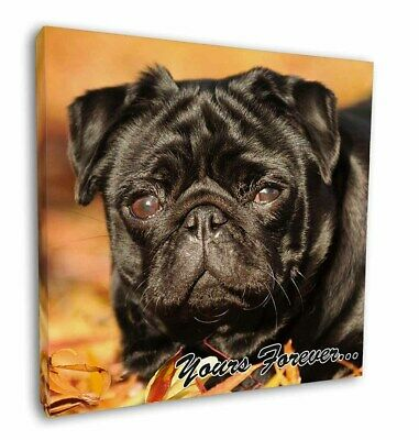 "Black Pug Dog 'Yours Forever' 12""x12"" Wall Art Canvas Decor, Pictur, AD-P97y-C12"