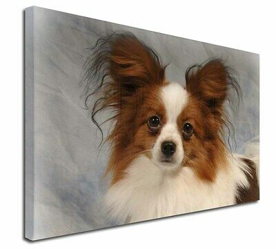 "Papillon Dog 30""x20"" Wall Art Canvas, Extra Large Picture Print De, AD-PA1-C3020"