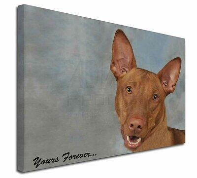 "Pharaoh Hound 'Yours Forever' 30""x20"" Wall Art Canvas, Extra Larg, AD-PH1y-C3020"