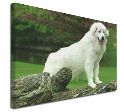 "Pyrenean Mountain Dog 30""x20"" Wall Art Canvas, Extra Large Picture, AD-PM1-C3020"