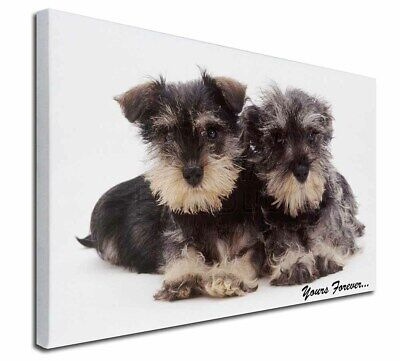"Schnauzer Dog 'Yours Forever' 30""x20"" Wall Art Canvas, Extra Large, AD-S76-C3020"