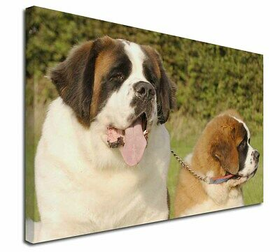 """St Bernard Dog and Puppy 30""""x20"""" Wall Art Canvas, Extra Large Pic, AD-SBE1-C3020"""