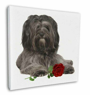 """Tibetan Terrier with Red Rose 12""""x12"""" Wall Art Canvas Decor, Pictur, AD-TT2R-C12"""