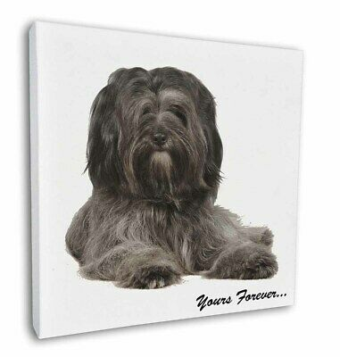 """Tibetan Terrier 'Yours Forever'  12""""x12"""" Wall Art Canvas Decor, Pic, AD-TT2y-C12"""