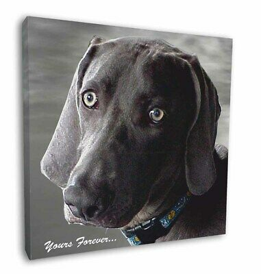 "Weimaraner Dog 'Yours Forever' 12""x12"" Wall Art Canvas Decor, Pictur, AD-W79-C12"