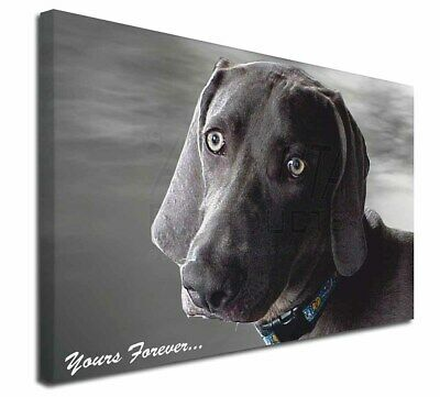 "Weimaraner Dog 'Yours Forever' 30""x20"" Wall Art Canvas, Extra Larg, AD-W79-C3020"