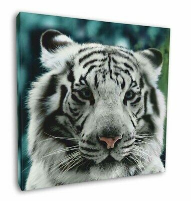 "Siberian White Tiger 12""x12"" Wall Art Canvas Decor, Picture Print, AT-13-C12"