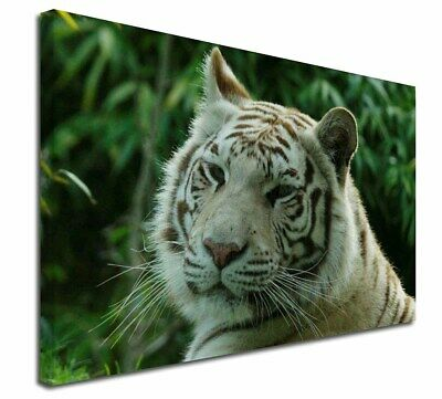 "Siberian White Tiger 30""x20"" Wall Art Canvas, Extra Large Picture P, AT-50-C3020"