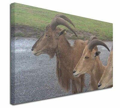 """Three Cheeky Goats 30""""x20"""" Wall Art Canvas, Extra Large Picture Pr, GOAT-2-C3020"""