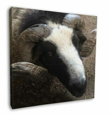 """New Goat Face 12""""x12"""" Wall Art Canvas Decor, Picture Print, GOAT-3-C12"""