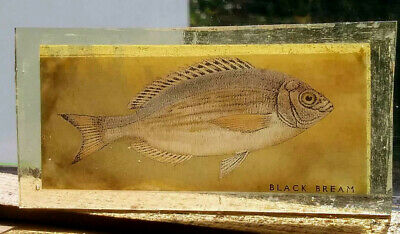 Stained Glass Black Bream fish fishing angling - Kiln fired pane panel window