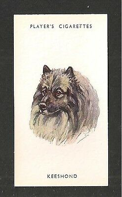 KEESHOND of The Spitz group all native to Northern Latitudes 1930's print card