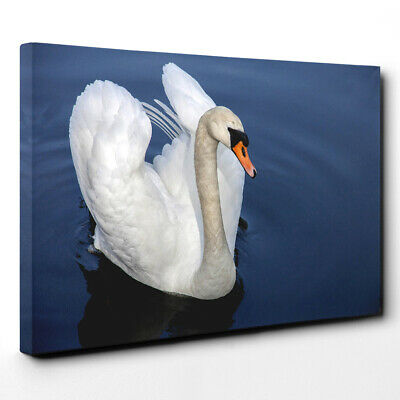 Canvas Wall Art Picture Print White Swan on a Lake (6)