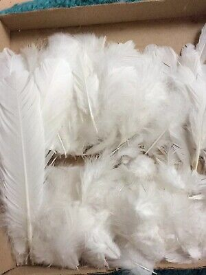200 White Bird Feathers Breast  flank Wing Art/Craft/Fishing A