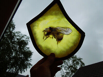 Stained Glass Fragment Honey Bee Nature Medieval Victorian
