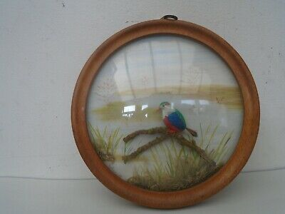 Quirky NATURE CRAFT Kingfisher display  made from Beechnut & sycamore seed case
