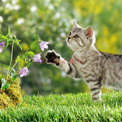 Catnip Seed 400 Seeds Catmint Nepeta Cataria Cat Spearmint Organic Seed S017