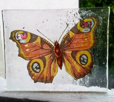Stained Glass Peacock Butterfly -  Kiln fired fragment pane piece!  (re-listed)
