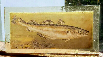 Stained Glass Whiting fish - Rare Kiln fired transfer / painted pane!