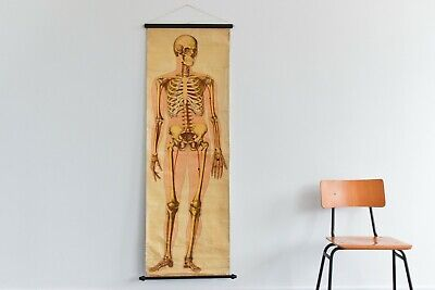 Vintage Large Human Skeleton Anatomical Poster Chart by Ruddiman Johnston & Co.