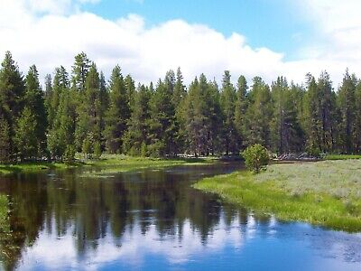 9.86 Ac~Oregon Land~Gorgeous Ranch~Near California~Timber~Views~No Reserve!!