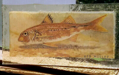 Stained Glass Red Mullet fish - Kiln fired transfer / painted fishing pane!