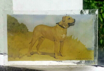 Stained Glass English Bull Mastiff dog - Kiln fired fragment  pane!