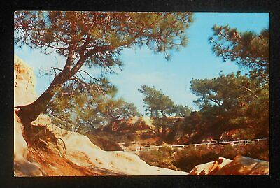 1963 The Torrey Pines La Jolla CA San Diego Co Postcard California