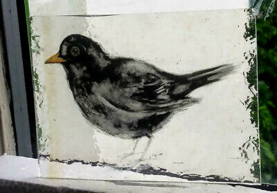 Stained Glass Blackbird -  Kiln fired transfer fragment bird pane!