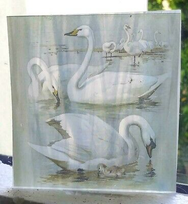 Stained Glass - Swans pane Kiln fired semi translucent