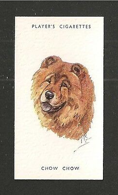 CHOW CHOW Teddy Bear appearance At one time bred in China as food print card