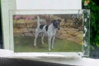 Stained Glass Smooth Fox Terrier dog - Kiln fired fragment  pane!