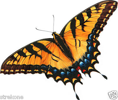 BUTTERFLY TIGER SWALLOWTAIL in flight Wings Open - Window Cling Decal Sticker