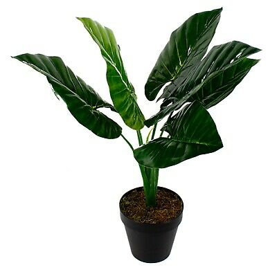 Elephant Ears Tarto Artificial Plant in Pot Fake Houseplant Faux Homewares 60cm