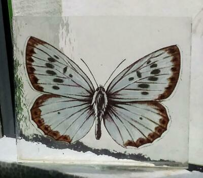 Stained Glass Large Blue Butterfly Kiln fired fragment pane piece  1 of 3 listed