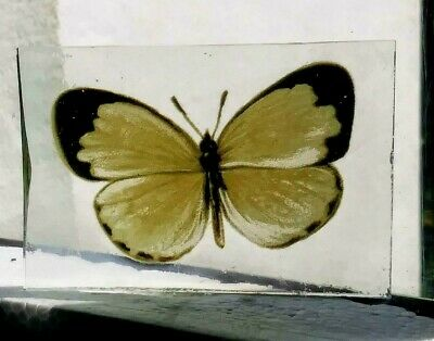 Stained Glass Yellow Butterfly -  Kiln fired fragment pane piece!