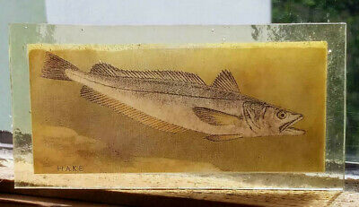 Stained Glass Hake fish fishing angling - Kiln fired fragment pane window