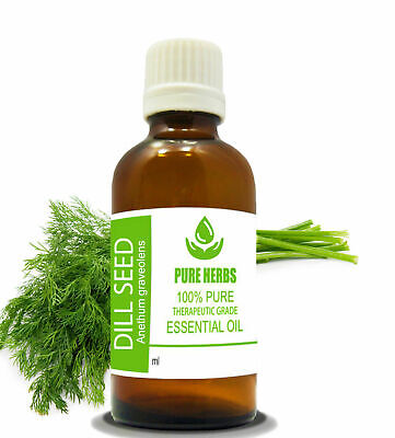 Dill Seed 100% Pure & Natural Undiluted Uncut Anethum graveolens Essential Oil