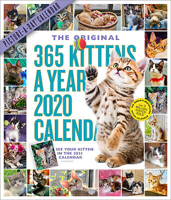 365 Kittens-A-Year 2020 Deluxe Wall Calendar by Workman