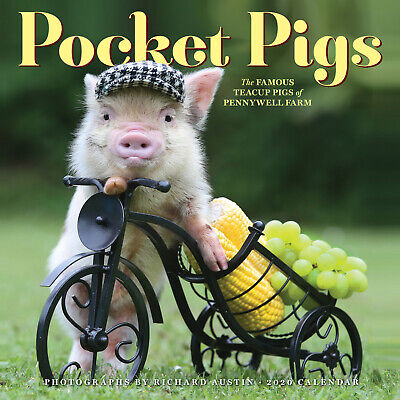 Pocket Pigs 2020 Square Wall Calendar by Workman